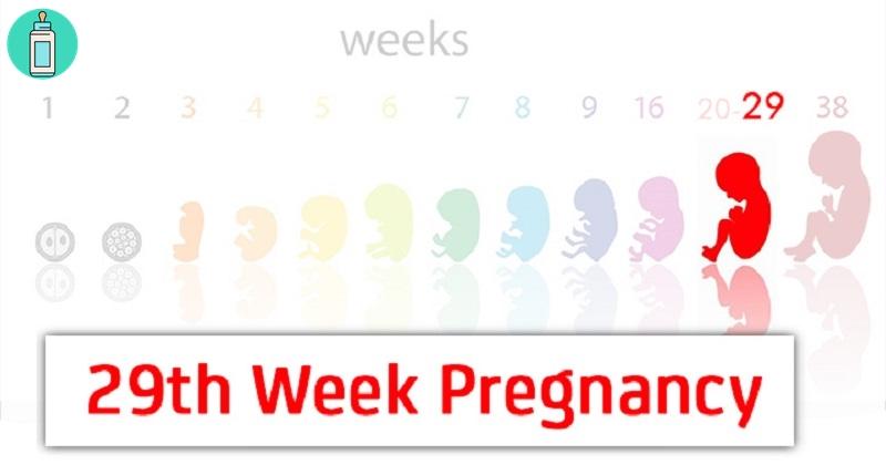 Mang thai tuần thứ 29 và sự phát triển của thai nhi